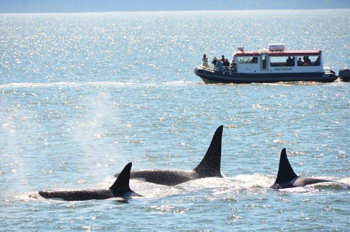 出海看鲸去!