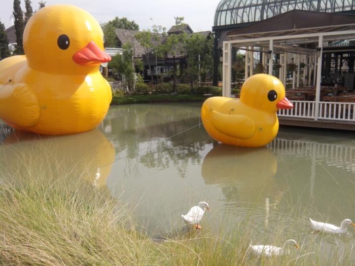 大鸭与小鸭??