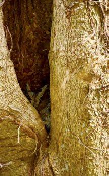 佳儒说农场里有神秘嘉宾到来,原来是躲在树洞里的猫头鹰。