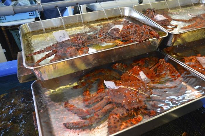 浅盆养蟹。总是有条不紊的日本人,蓄养环境都干净无比。