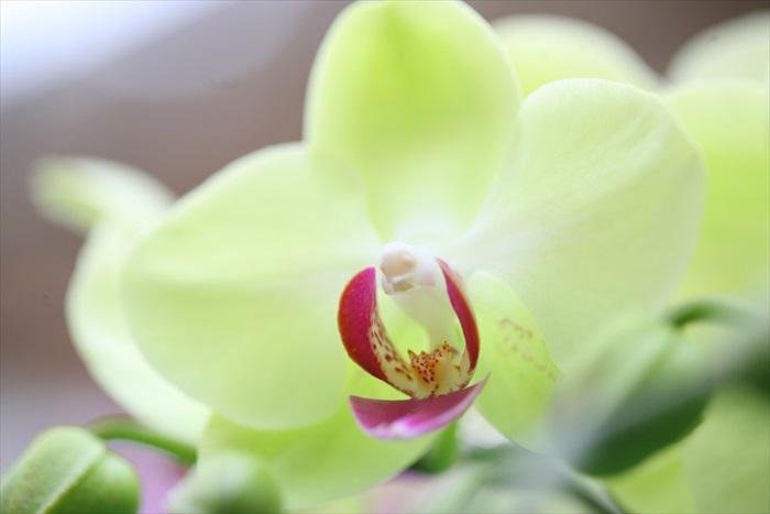 走入兰花温室,欣赏各种姿态的兰花。(3)