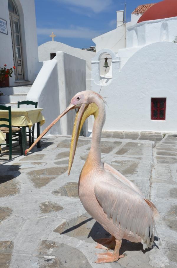 我陶醉在迷路中;希腊米克诺斯岛内迷一般的美。