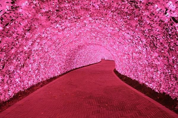 100mトンネル「河津桜」