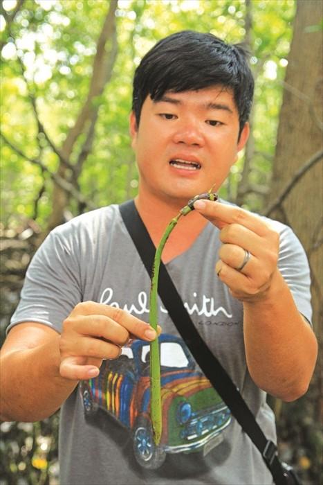 Steven手上的就是红树林的幼苗,只要插进沼泽就能继续生长。