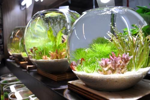 就算只拥有一小片水草世界,感觉也很赏心悦目。