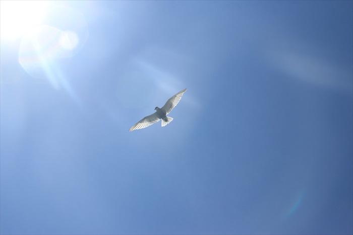 飞翔在空中的海鸥。