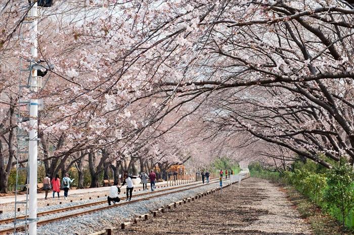 樱花虽璀璨但一瞬即逝,火车也一样不等人,一柔一刚地都在暗喻你要把握现在,时光不等人。