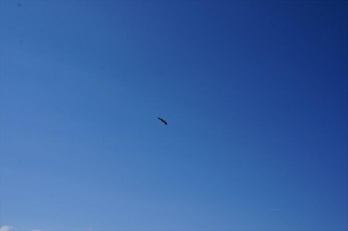 看到吗?是帅气的鹰!