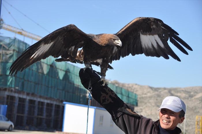 鹰和养鹰人都好帅气!