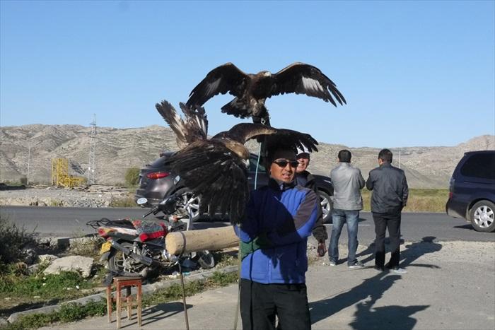 当地人当年养鹰是为了狩猎,但随着民间保护野生动物意识日渐普及,且鹰类也因数量减少也被列为国家保护动物,因此较少人养了。