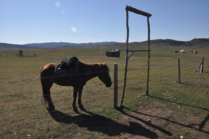 马也是被豢养着。