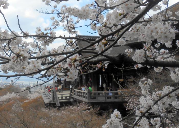 日本清水寺大名在外,除了本身的历史背景、建造方式、国宝级身份以外,每到樱花开放,或红叶满树时节,这里的景致更是明信片常驻画面,人龙再多也不灭参观的欲望之火。