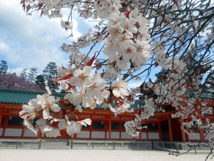 花季期间参观神社,最有味道。