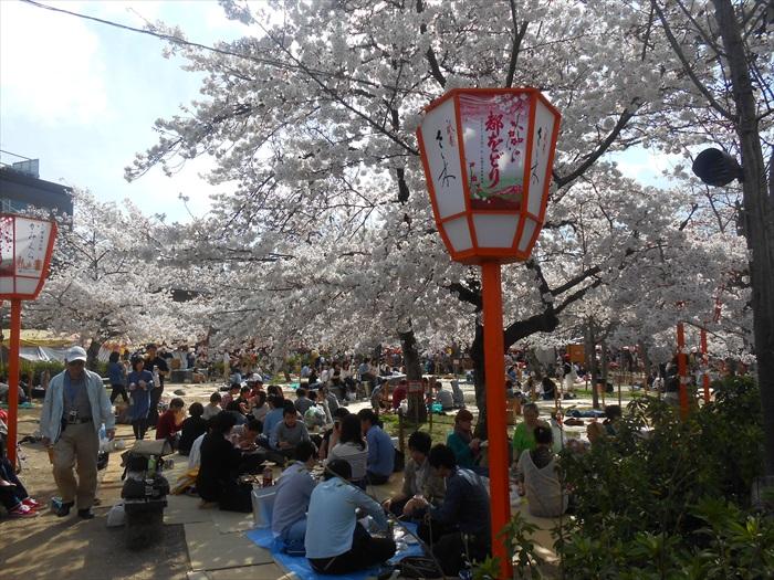 在樱花树下野餐,是日本民众最喜欢的赏花活动之一。