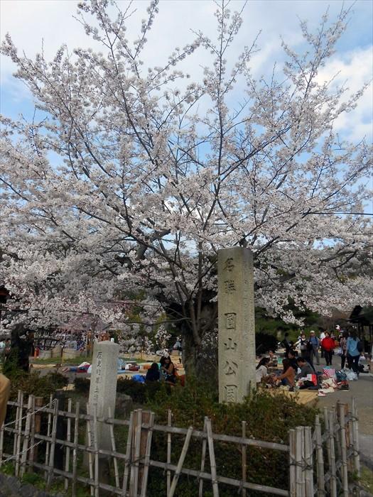 圆山公园是日本其中一个日本最佳的赏樱地点。