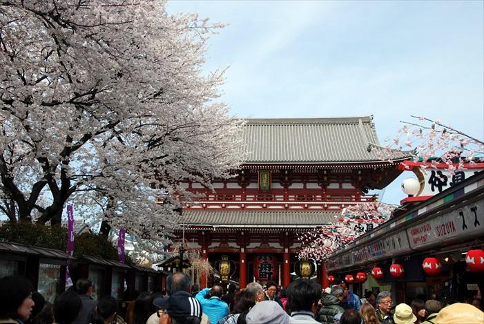 春季到访的话,还有樱花相伴。