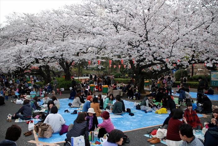 可以和三两知心好友在樱花树下欢乐度过,正翻!