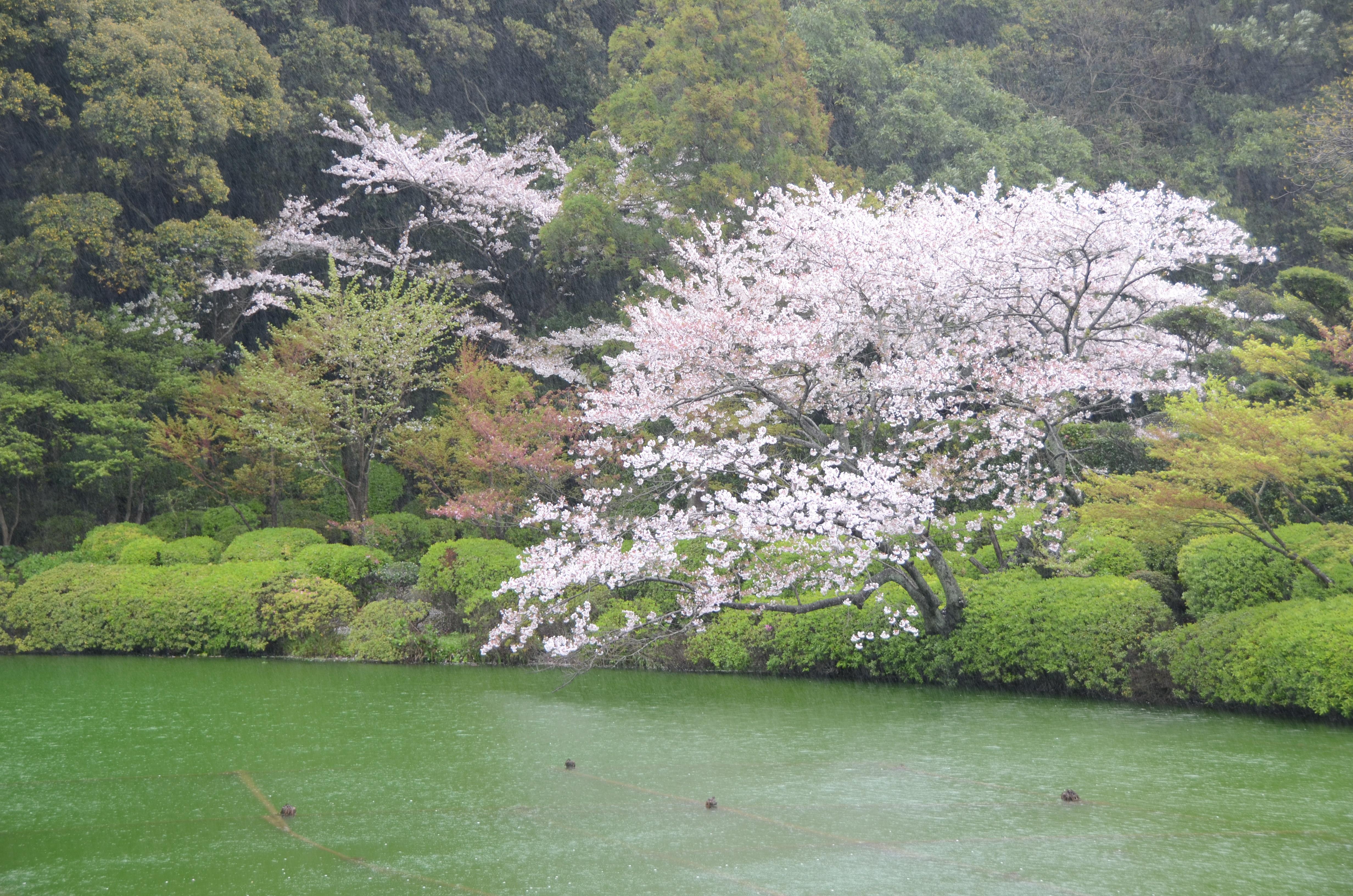 海地狱景色怡人,也是个能赏樱的好去处!