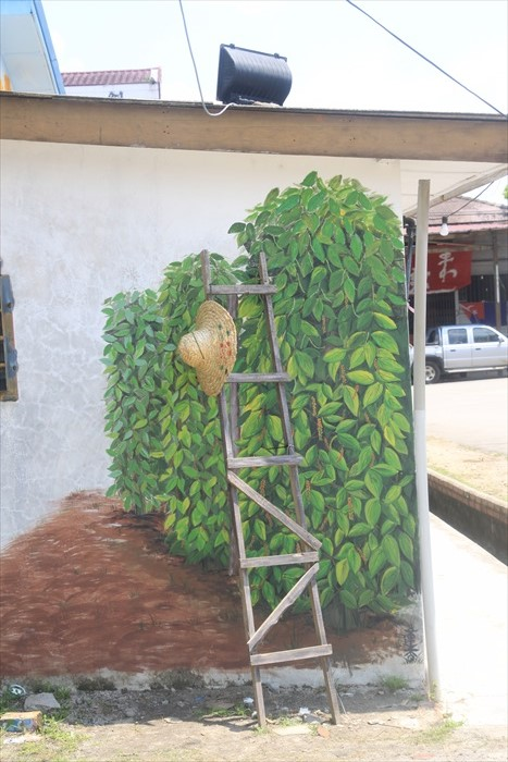 沙威新村曾经是胡椒之乡,农民在烈日当空下爬上梯级采收胡椒。