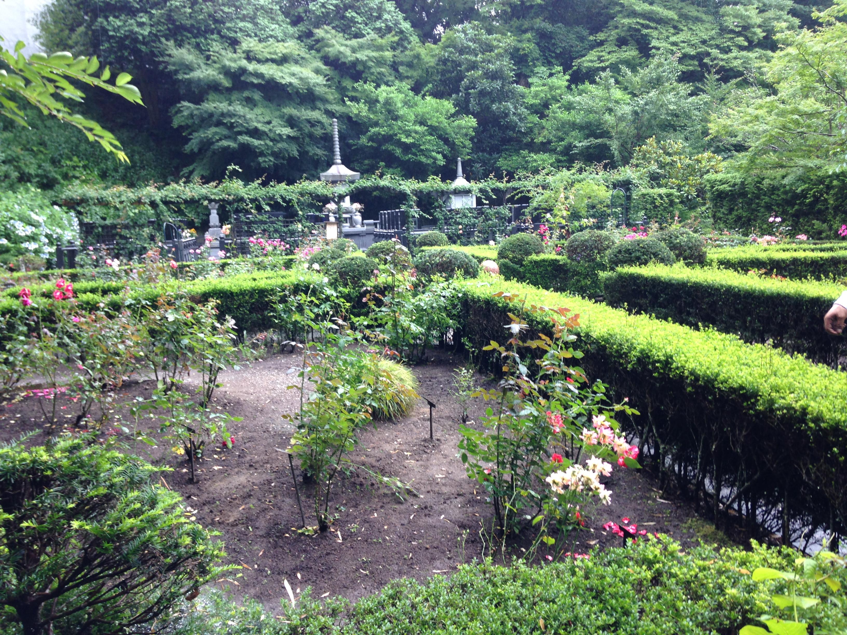 美丽的日本庭院,沿途栽种着许多玫瑰。