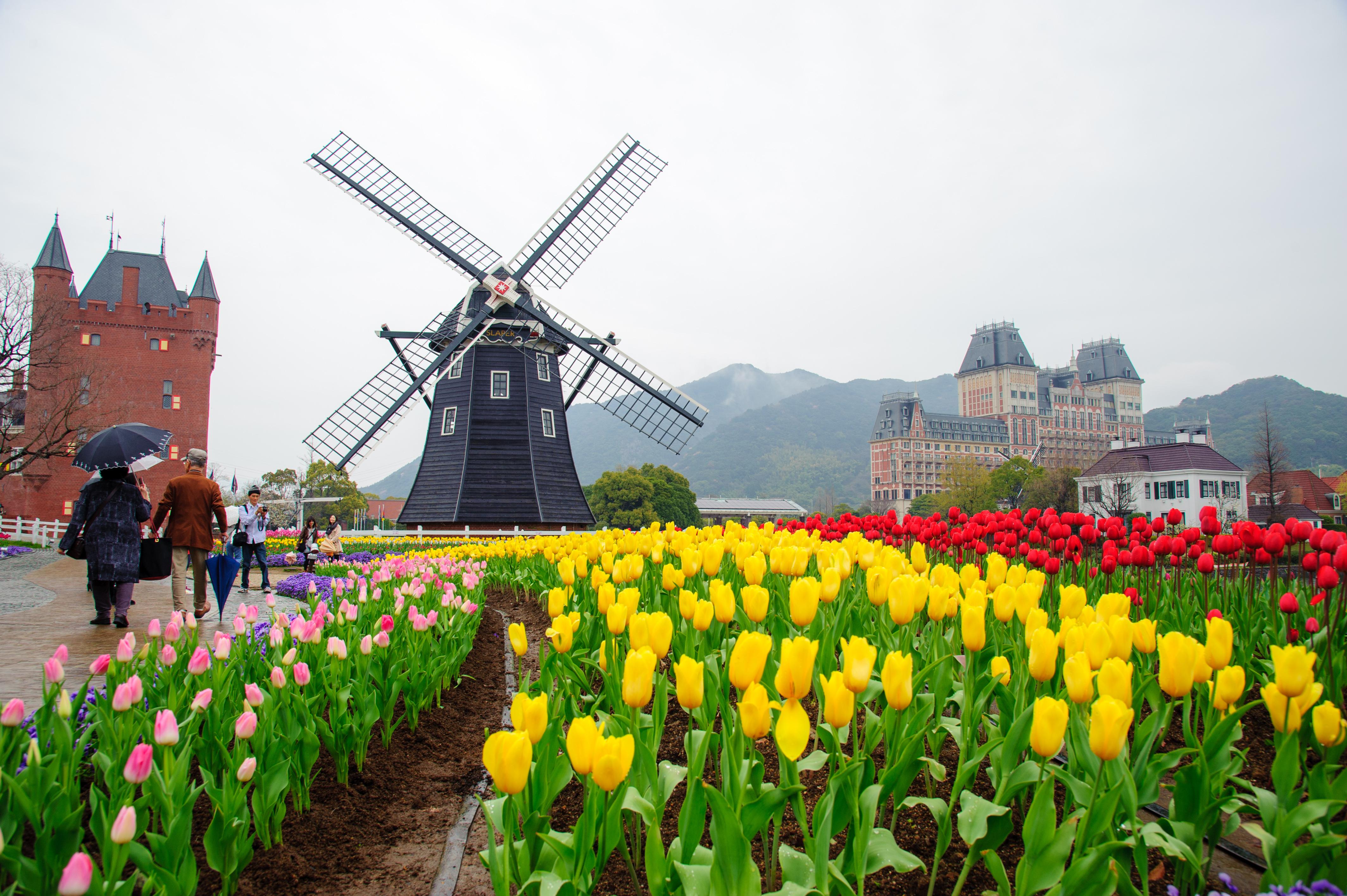 风车和遍地綻放的郁金香,是豪斯登堡春季的代表性风景。