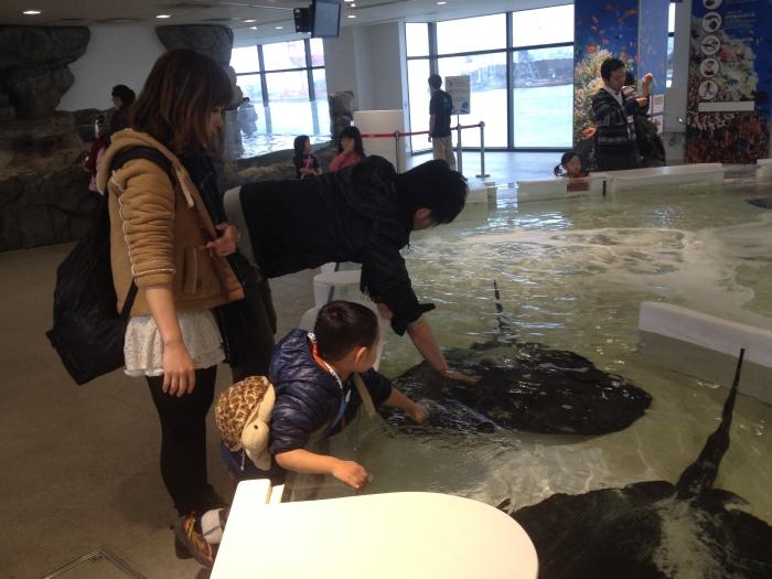 对于小孩和好些大人来说,触摸池绝对是个挑战胆量的地方。
