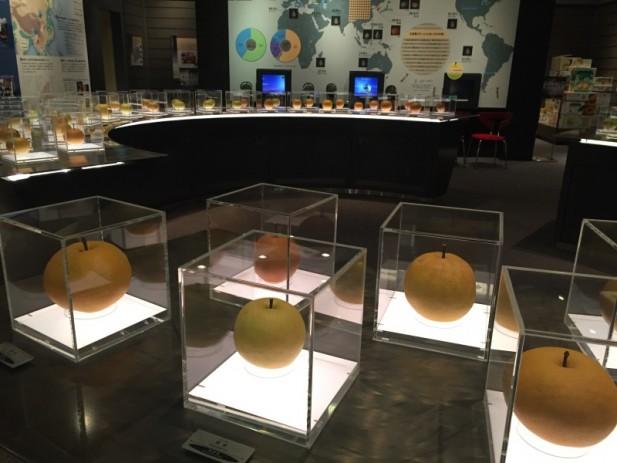 """鸟取县的梨子博物馆,这里展出来自世界各地的梨子,当然也少不了响当当的""""鸟取二十世紀梨""""。"""