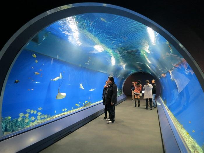 入口处的隧道型水槽,饲养者多种美丽的海水鱼。