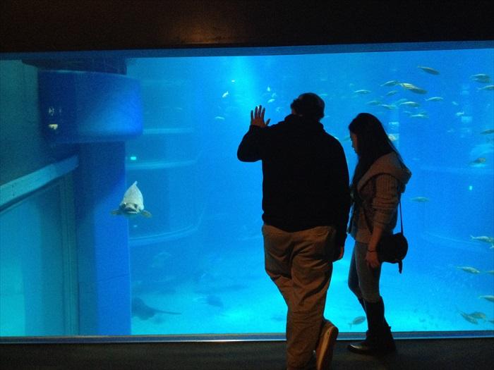 情侣和鱼勾勒出这有趣的画面。