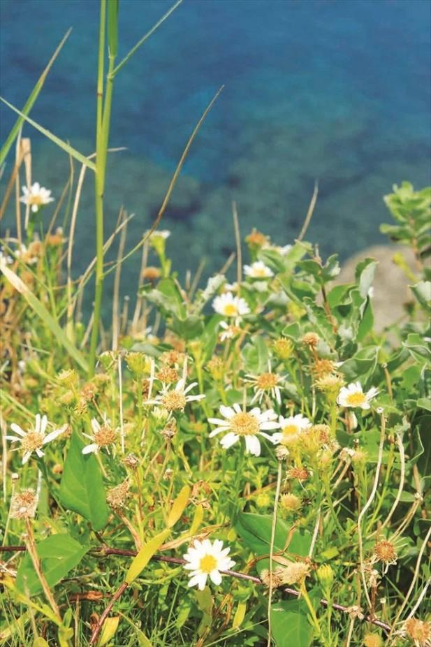 万座毛周围群生的植物被指定为县立的天然纪念物。