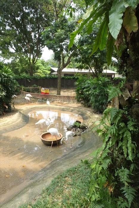 树秧下游走动物园