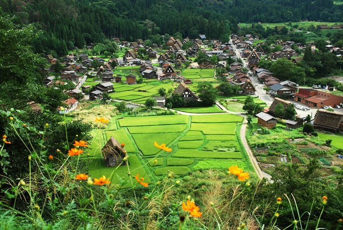 Shirakawa-go is a Unesco World Heritage Site famous for mountain ranges, quiet rivers and the gassho zukuri farmhouse.