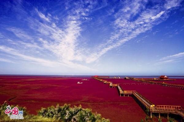 由小植物营造出来的红色丝绒般景观,与蓝天相映成绝美景色。