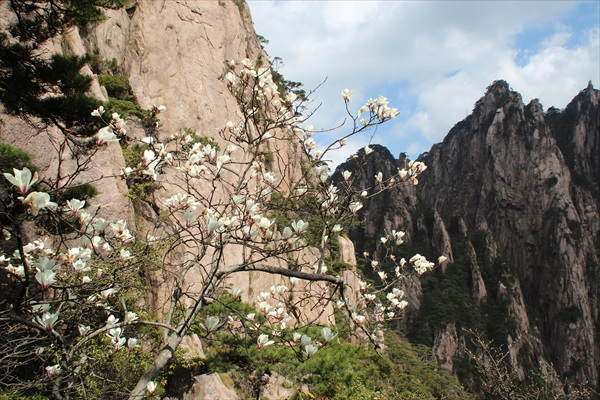 古松等植物伴着石山,塑造出硬朗中带着丝丝柔情的景致。