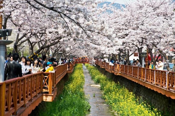 一眼望去,满满的樱花填满了灵魂之窗!
