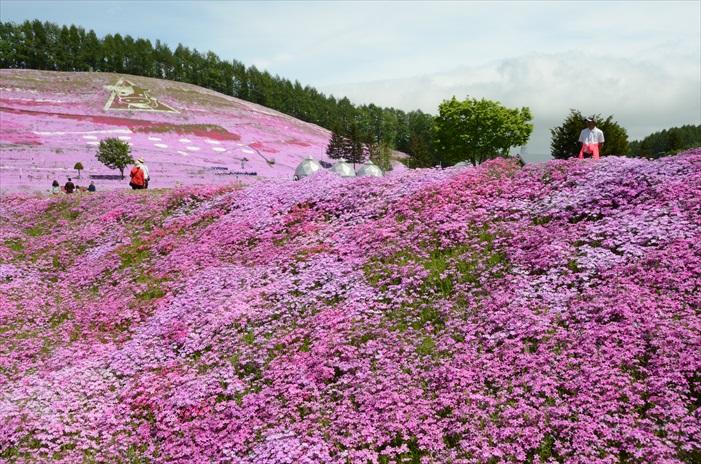 缓坡让花地毯显得更立体。