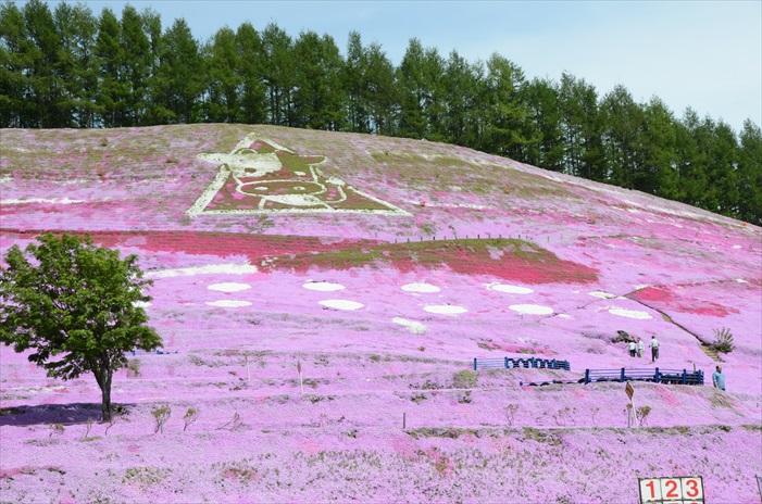 漫山的粉色花地毯。