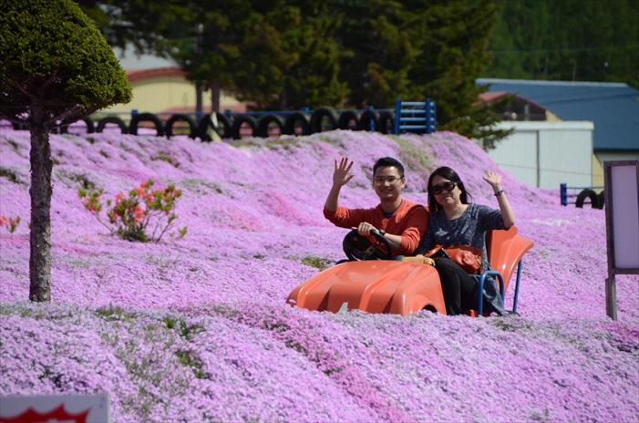 游客可以骑着机动小车游走芝樱花园。