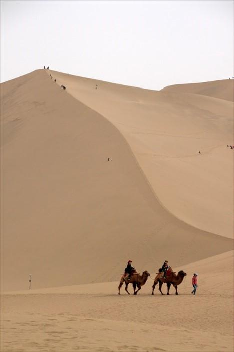 大漠之中,总少不了沙漠之舟——骆驼之身影。