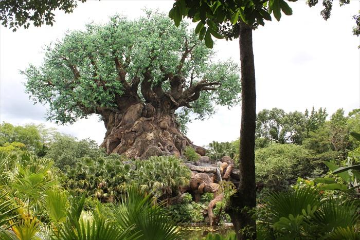 这就是生命之树!