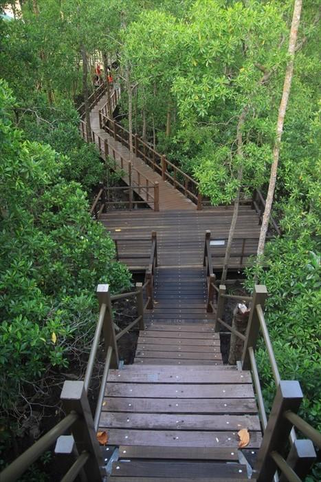 木质瞭望台,环顾四周茂密红树林。