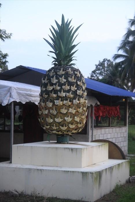 黄梨博物馆是研发黄梨,并记载黄梨种植过程。