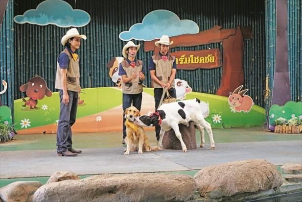 Farm Chokchai (六)