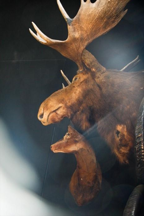 黑庙展示的动物标本。