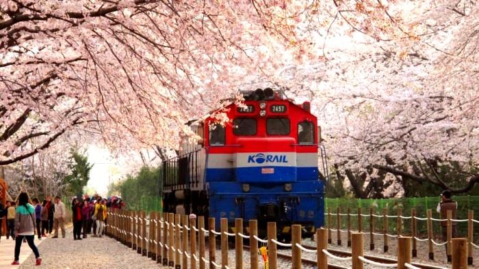庆和站是镇海的下一站。约800米的樱花轨道,每年到了樱花祭便会开放跌路,火车到这里会缓慢前进,让游客拍下火车经过的那一刻。