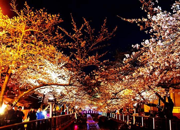 有彩灯相伴,越夜越美丽!