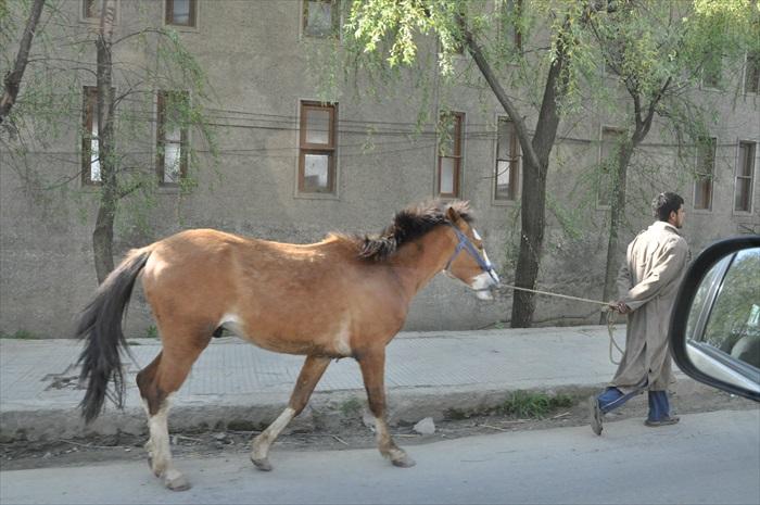 印度的马路并不是人车专有,你可能还可以遇到各种动物。