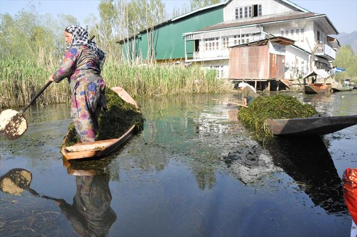 当地人正清理湖水中过多的水藻。
