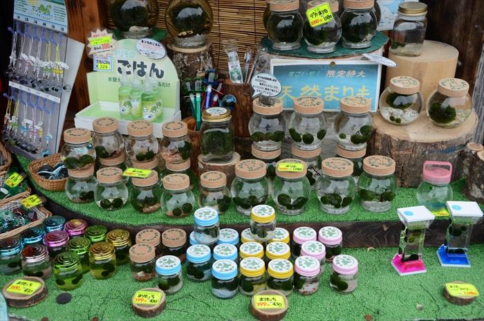 野生的Marimo球藻是受保护的,而养殖的Marimo可是极具趣味性的伴手礼!