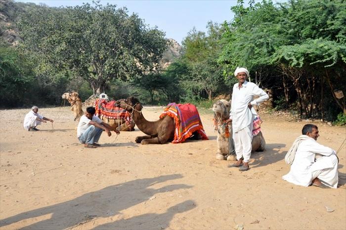 每一只骆驼都会有一人牵着。
